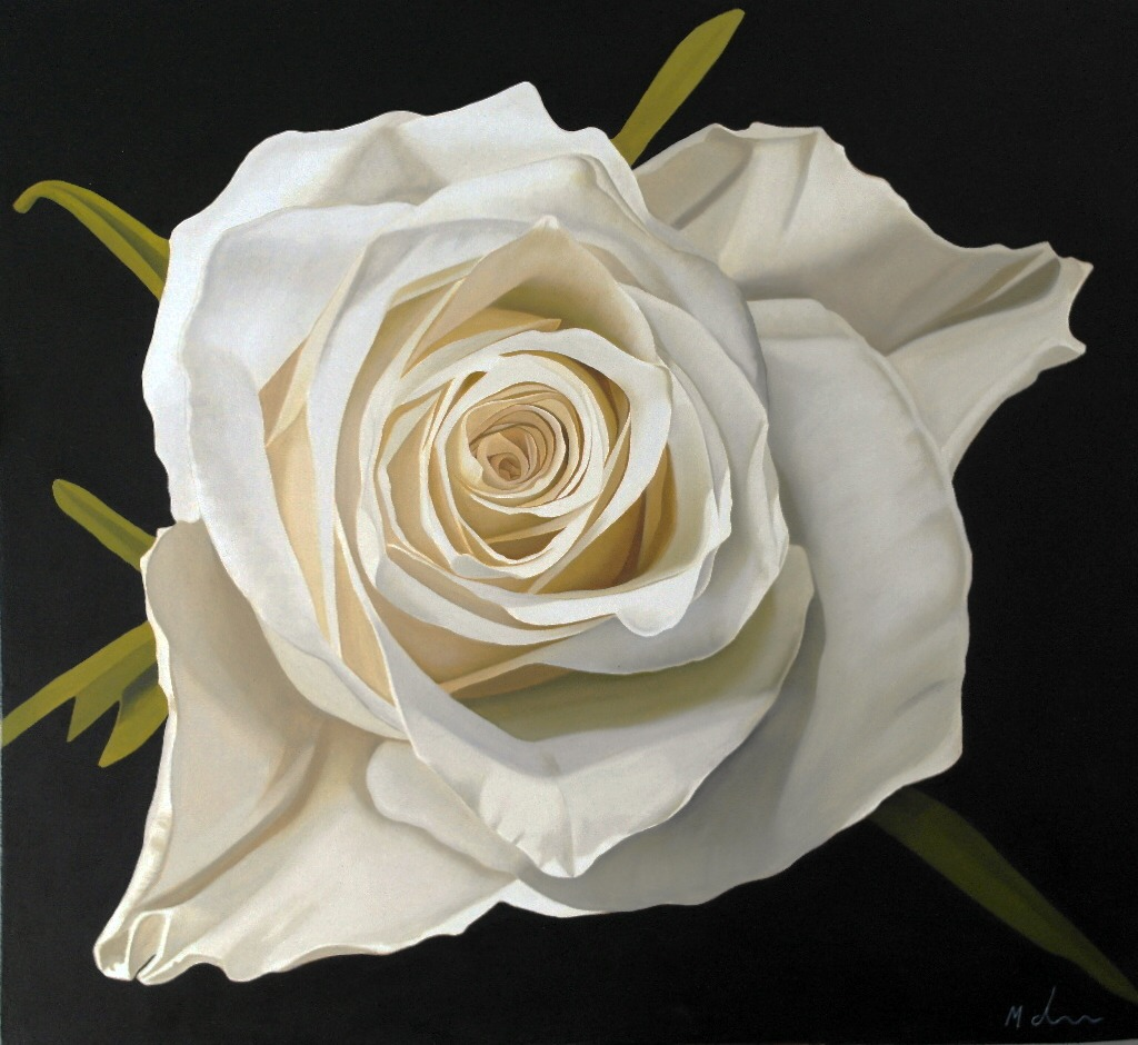 Michael de Bono - White Rose - Oil - 12 x 13.5 inches