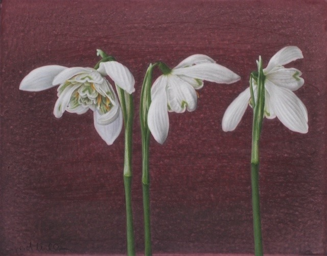 Sigrid Muller - Snowdrops - Mixed Media - 7.5 x 9.5 inches