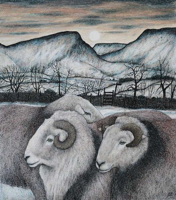 Seren Bell - Herdwick Rams - Mixed Media - 18 x 16 Inches