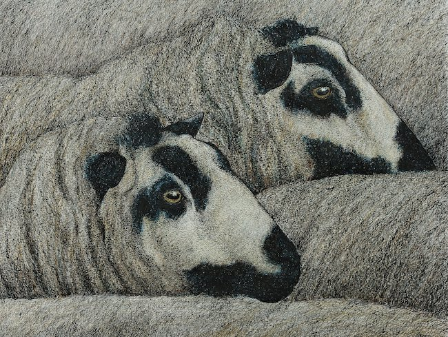 Seren Bell - Torddu Ewes - Mixed Media - 11 x 14.5 Inches